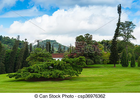 Stock Image of Botanical Garden of Peradeniya, Kandy,