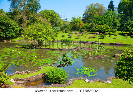 Botanical Garden Landscape Peradeniya Kandy Srilanka Stock Photo.
