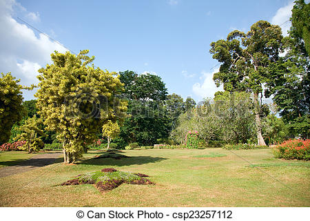 Stock Photography of different kinds of trees in Royal Botanical.