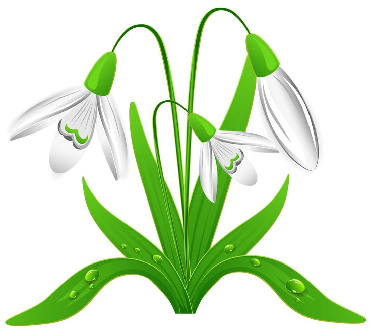 Spring_Snowdrops_PNG_Clipart_Picture.png (2365×2105).