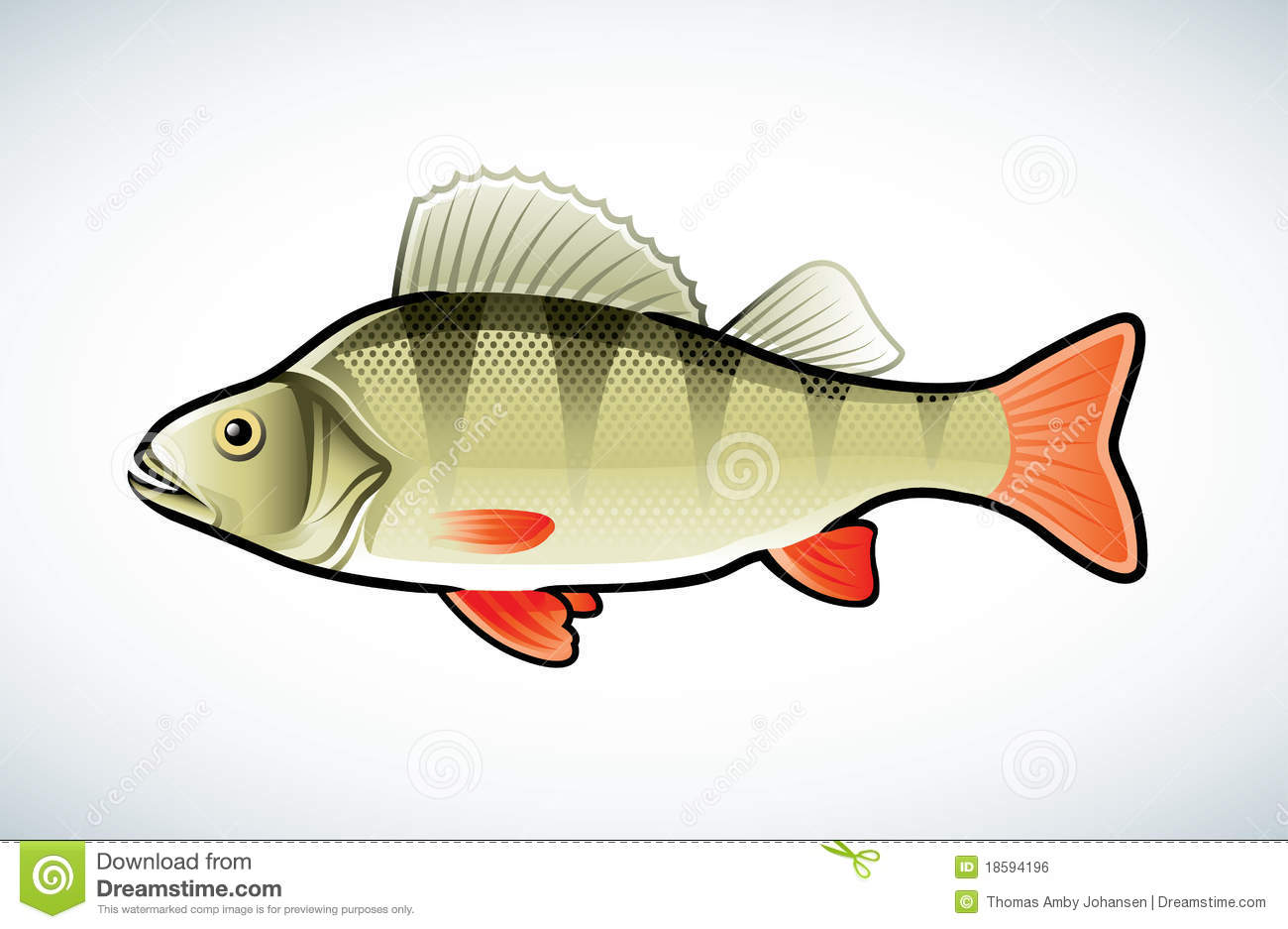 Perch Illustration Royalty Free Stock Image.