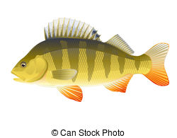 European perch Illustrations and Stock Art. 58 European perch.