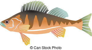 Perch Illustrations and Clip Art. 5,071 Perch royalty free.