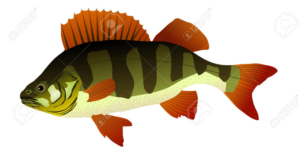 5,675 Perch Stock Vector Illustration And Royalty Free Perch Clipart.