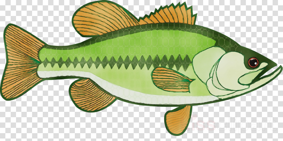 fish fish clip art bass perch clipart.