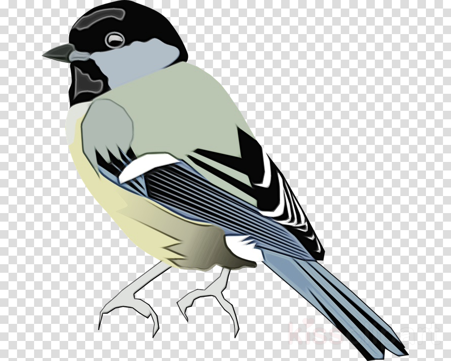 bird beak bobolink songbird perching bird clipart.