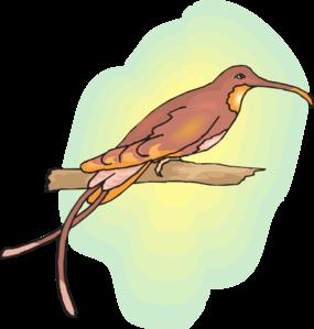Brown Hummingbird Perched Clip Art at Clker.com.