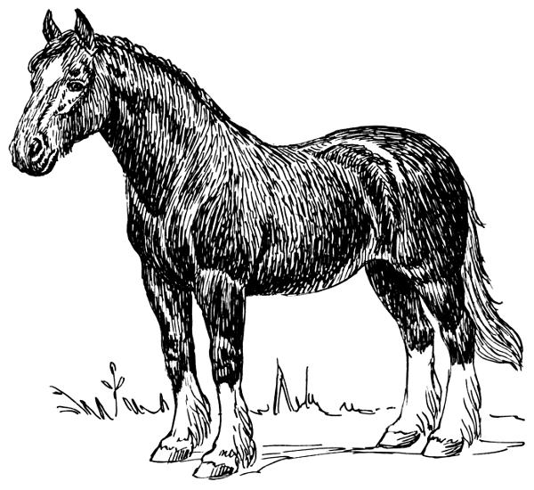 Draft Horse Clipart.