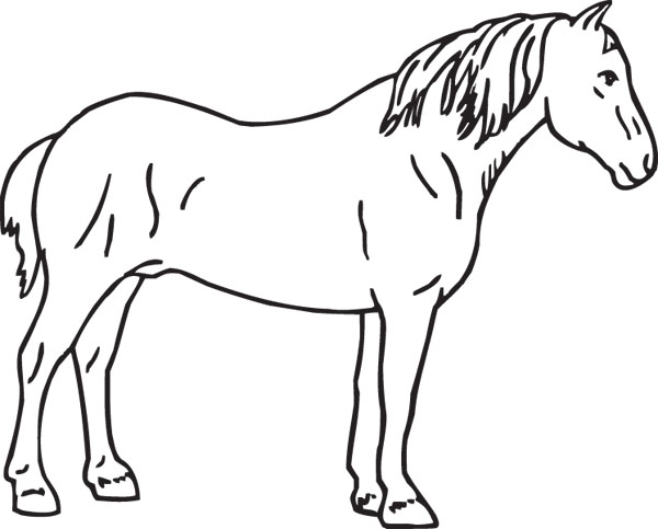 Percheron Graphic Clip Art For Custom Horse Lovers Gifts.