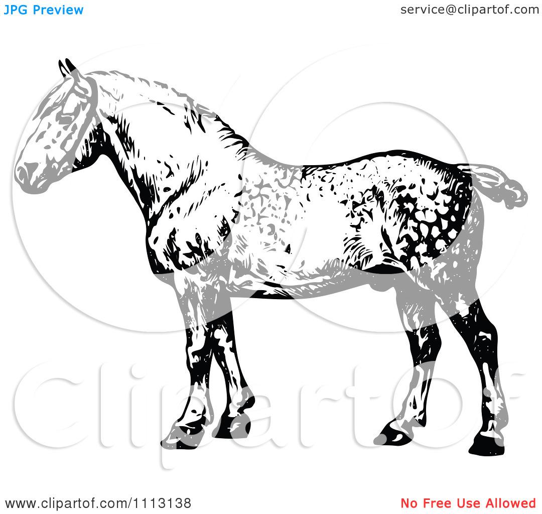Clipart Vintage Black And White Percheron Horse.