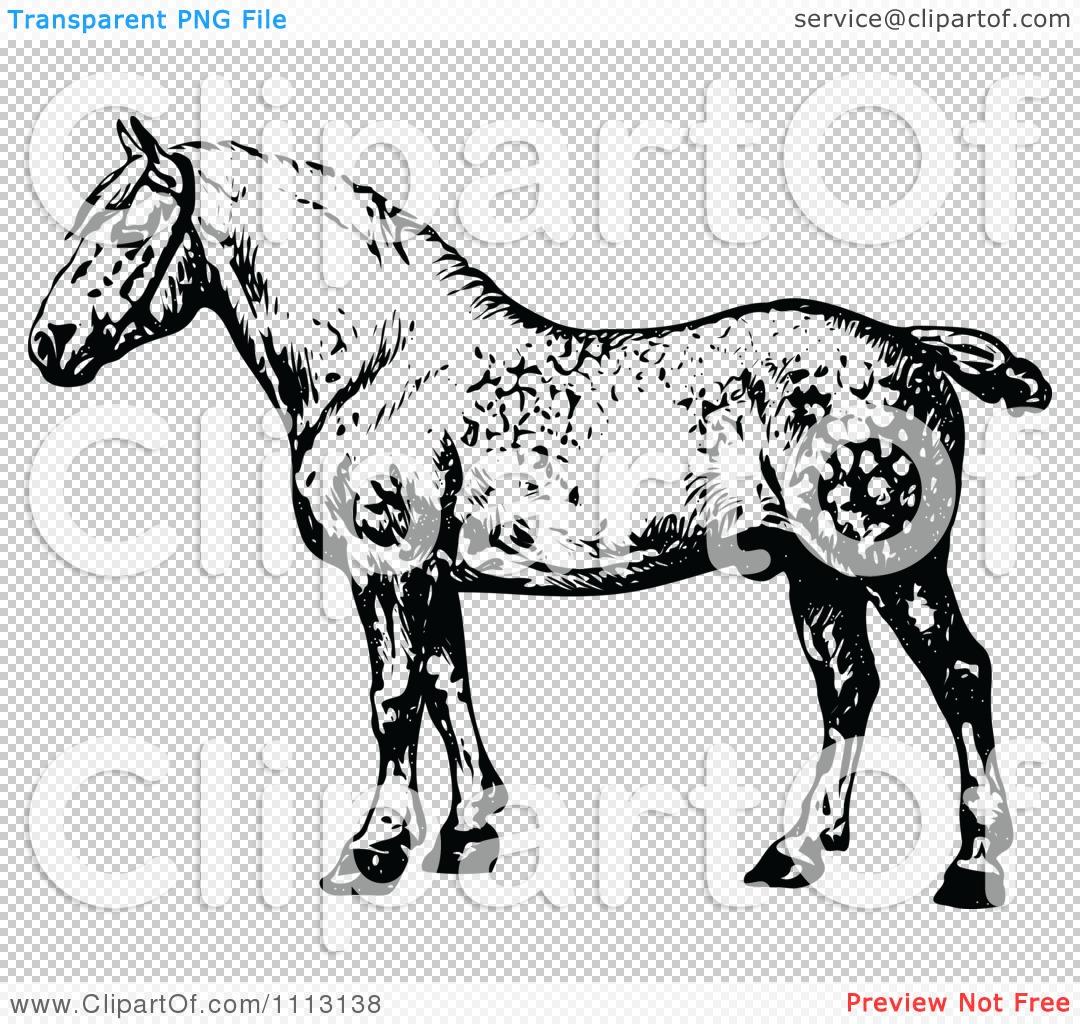 Watch more like Percheron Horse Clip Art.