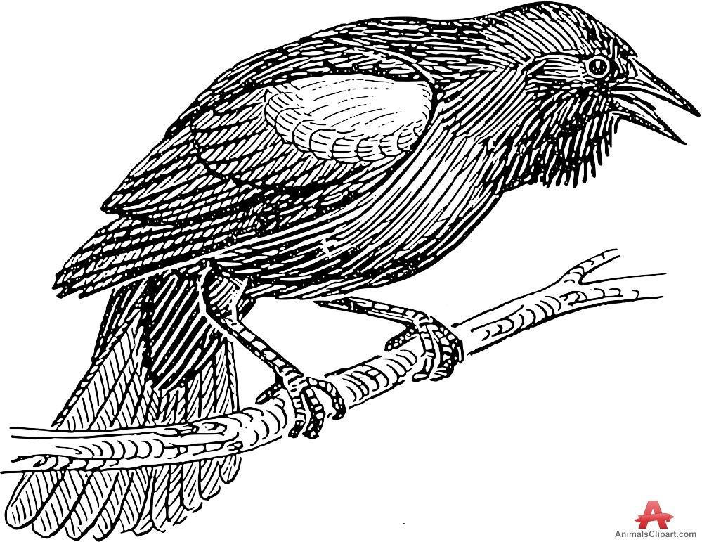 Bird Perching Drawing Clipart.