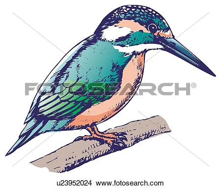 Drawings of Kingfisher perching on branch, side view u23952024.