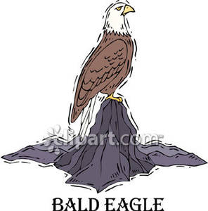 Bald Eagle Perching Clipart.
