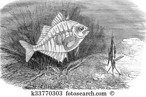 Perciformes Stock Illustration Images. 21 perciformes.