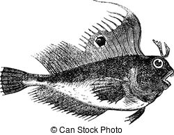 Perciformes Illustrations and Clip Art. 29 Perciformes royalty.