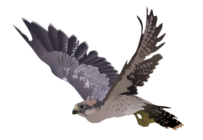 Best Falcon Clip Art #15453.