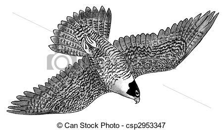 Falcon Illustrations and Clip Art. 4,626 Falcon royalty free.