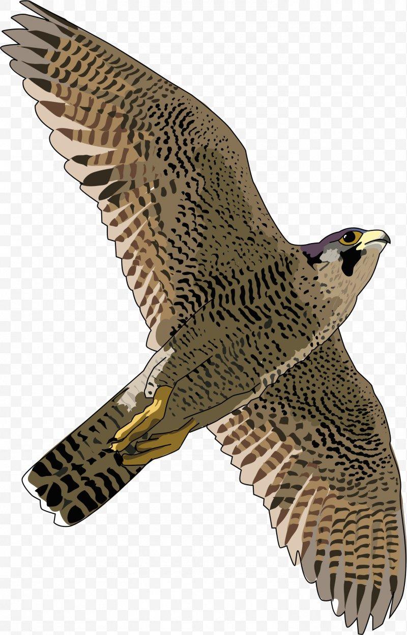 Hawk Peregrine Falcon Eagle Fauna, PNG, 1456x2268px, Falcon.