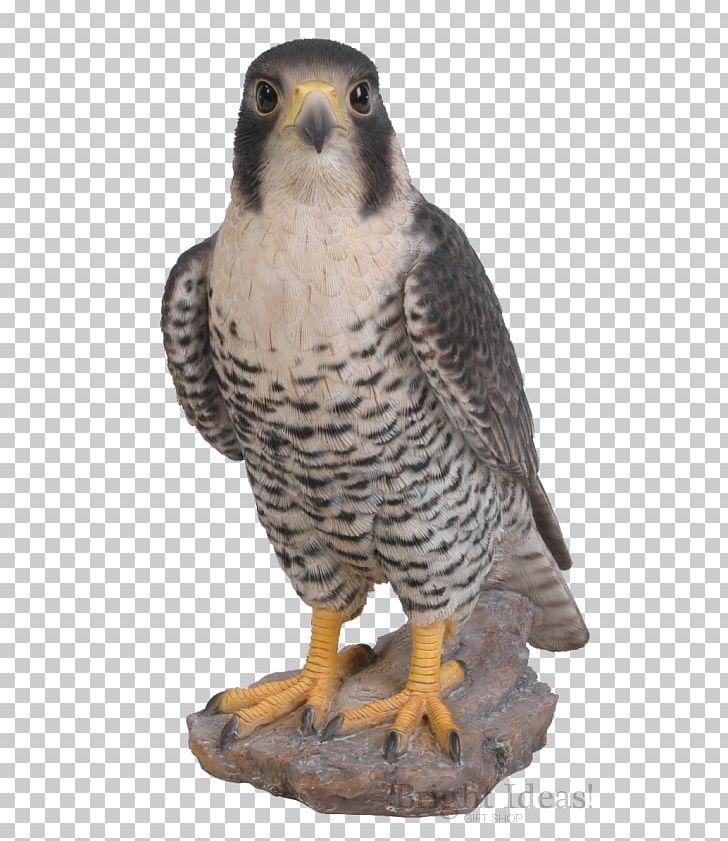Peregrine Falcon Bird Ornament Art PNG, Clipart, Animal.