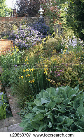 Picture of Colourful perennials in flowering border in large.
