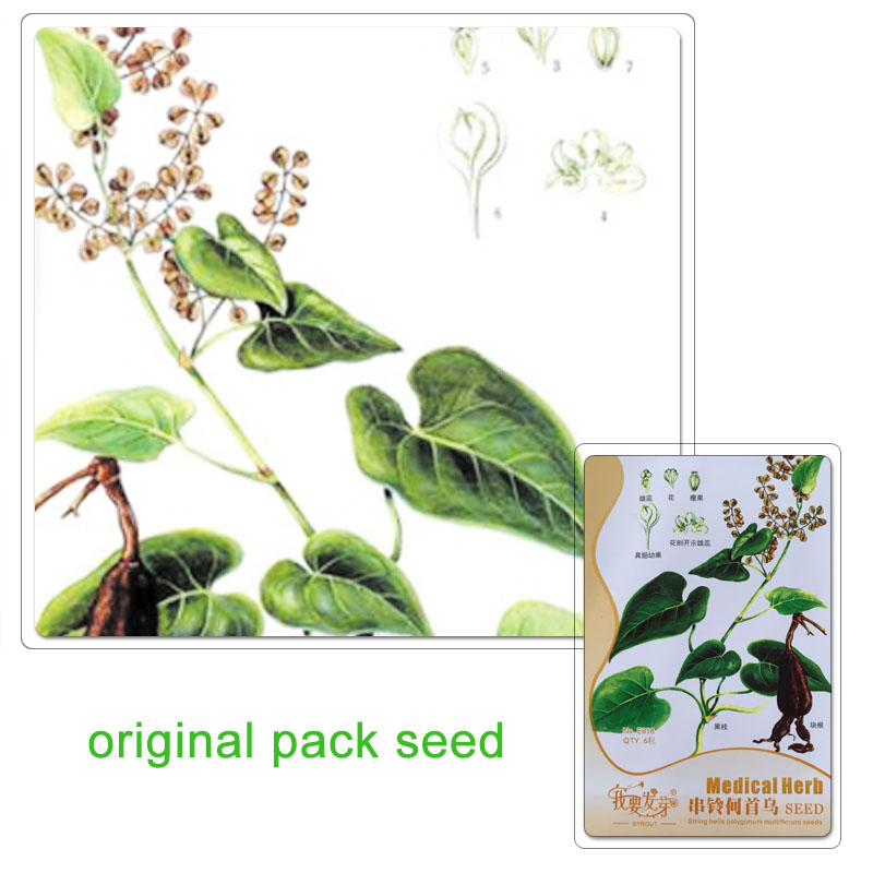 Perennial Herb Seeds Promotion.