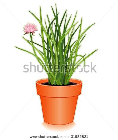 Allium Schoenoprasum Stock Vectors & Vector Clip Art.