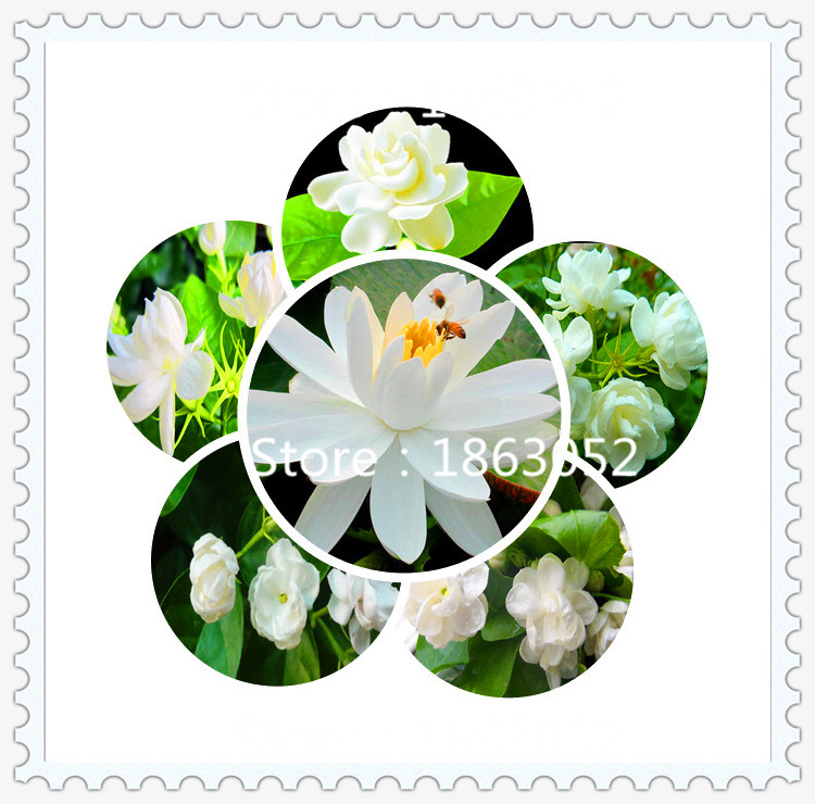 Compare Prices on Perennial Flowers Seeds.