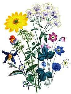 Perennial Plants.