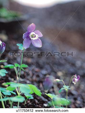 Stock Photo of Wildflower, flower, plants, plant, flowers.