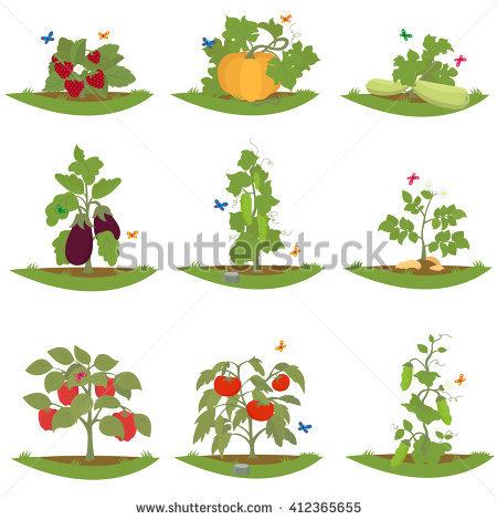 Perennial Plant Stock Vectors & Vector Clip Art.