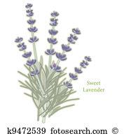 Perennials Clip Art Illustrations. 625 perennials clipart EPS.