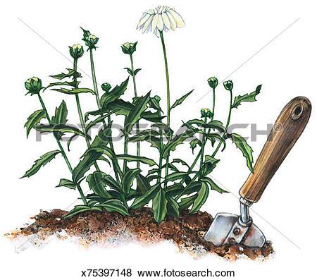Stock Illustration of Trowel & Perennials x75397148.