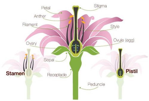 Everything You Ever Wanted To Know About Plants, Part 7: When is a.