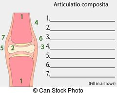 Periosteum Illustrations and Clip Art. 27 Periosteum royalty free.