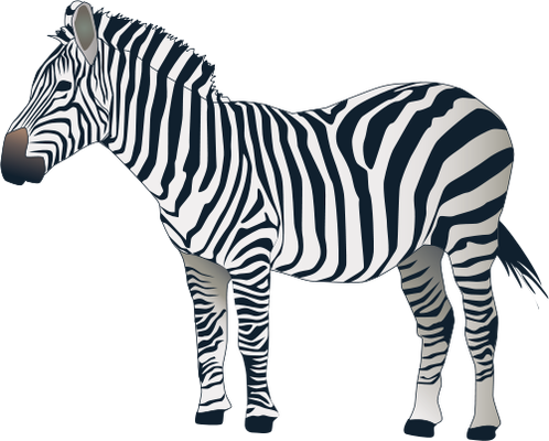 Equus quagga (Plains Zebra).