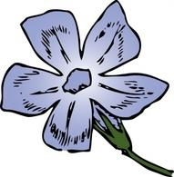 Periwinkle clip art Free Vector.