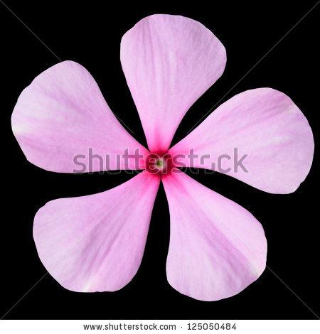 Periwinkle Flower Stock Photos, Royalty.