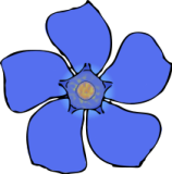 Periwinkle flower clipart.