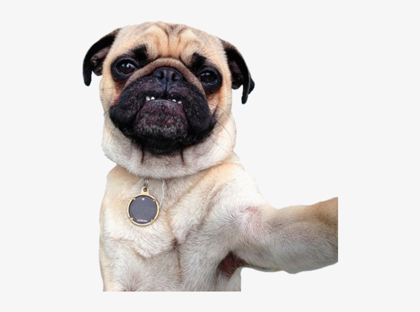 Perro, Png, And Pug Image.