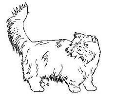 Persian cat clipart.