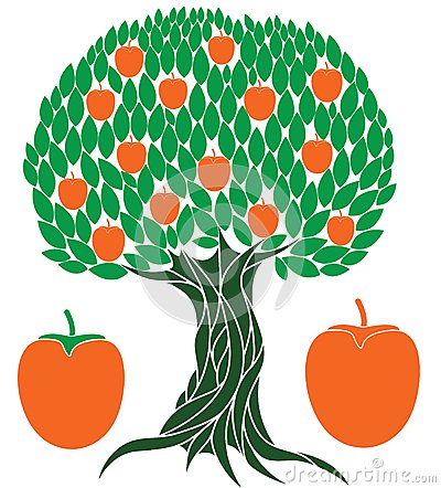 Persimmon Tree Stock Illustrations.