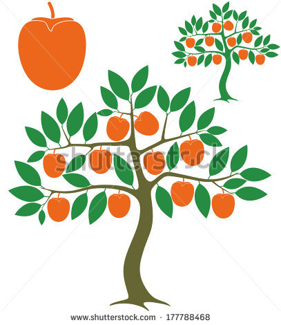 Persimmon Tree Stock Photos, Royalty.