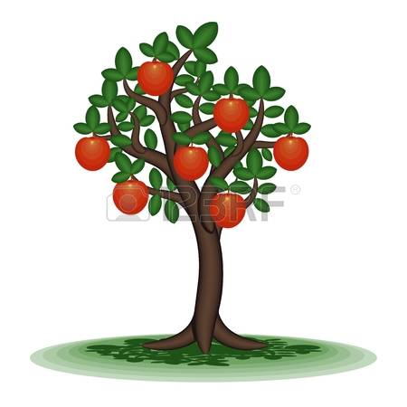 101 Persimmon Tree Stock Vector Illustration And Royalty Free.