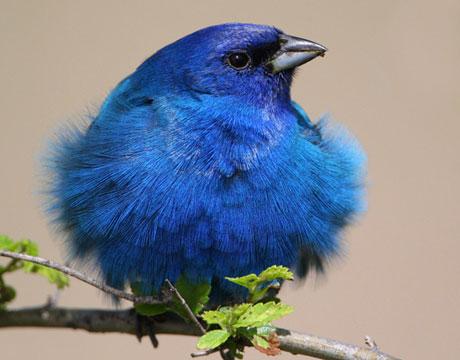 17 Best images about Audubon on Pinterest.