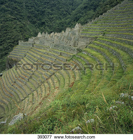 Picture of Ruins in terraced fields at Machu Picchu, Andes.