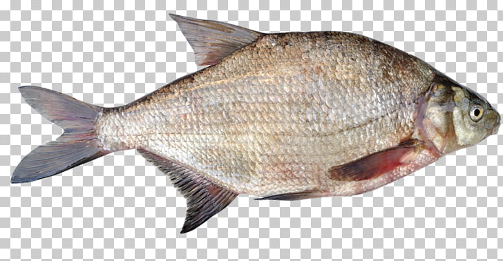Dorada común productos de pescado tilapia, pescado PNG.