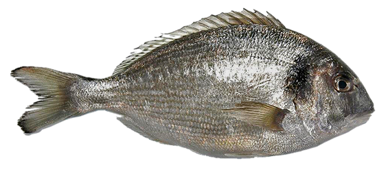 Pescado png 3 » PNG Image.
