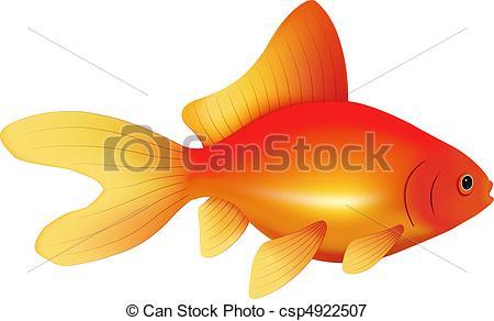 Illustrazioni vettoriali di pesce rosso, ordinario, tipo.
