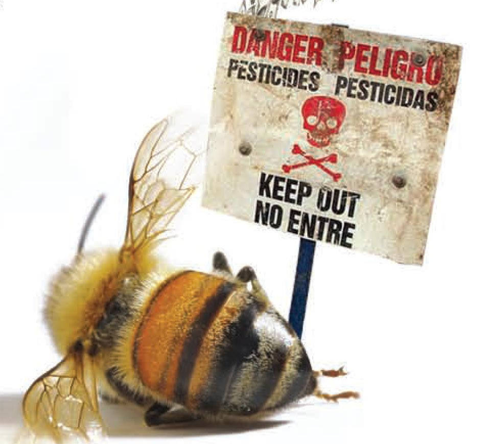 Colony Collapse Disorder Archives.